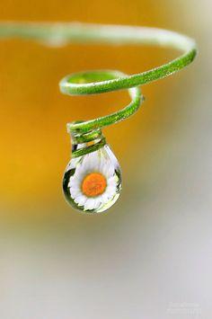 ภเгคк ค๓๏ Water Drops, Rain Drops, Color Photography, Macro Photography, Macro Pictures, Drip Drop, Fotografia Macro, Water Art, Water Pearls