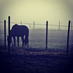 Horse in the fog, Ski, Norway. Horse Pictures, Nature Photos, Beautiful Landscapes, Norway, Skiing, Elephant, Instagram Images, Horses, Photo And Video