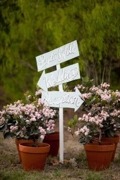 Use some potted flowers to decorate outdoor wedding ceremony and reception, they look great and can be cheaper than florist flowers