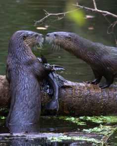 """""""You wouldn't consider sharing that fish, would you, hmmmmm?""""                (IMG_6631 by Steve Leach on Flickr)"""