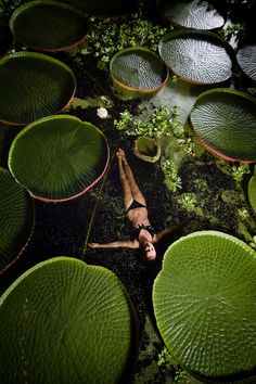 Swimming Among the Lily Pads