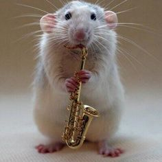 Ten Amazing Pictures of Rats Playing Musical Instruments Funny Cat Pictures, Funny Photos, Cool Pictures, Creative Pictures, Animal Pictures, Funny Baby Photography, Mouse Photos, Funny Baby Quotes, Cute Rats