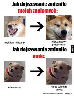 Read from the story MEMY by pokrecona_wariatka (Klaudusiek) with 446 reads. Stupid Memes, Funny Memes, Jokes, Polish Memes, Weekend Humor, Haha Funny, Hilarious, Reaction Pictures, Pranks