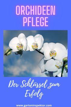 Orchideenpflege kann so einfach sein, wenn man das Geheimnis kennt. Nie war Orchideen kultivieren so unkompliziert. Hygge, Entrepreneurship, Advent, Trends, Female, Movie Posters, Patio, Young Life, Book Presentation