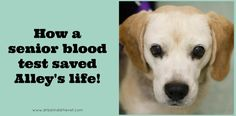 How a senior blood test saved Alley's life!