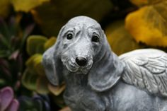 Dachshund Angel Dog Garden Sculpture / Doxie Angel Statue  I love my Doxies and when I saw the expression on this statues face -- I just knew I had to add it my collection of Angel Pets. My pet angel memorial statues are made with love and I hope they may bring comfort to you or someone you know who has lost a dear friend. This particular pet angel statue is the perfect size to put next to an urn or photograph or in a nice sunny spot in your garden.  Anyone who has ever lost their belove...