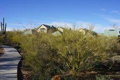 ListedGreen.com | Green Home Listing 3049 N Gaia Tucson, AZ 85745 United States http://www.listedgreen.com/index.cfm/page/property-listing/adid/1546