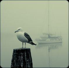 Austin Davis' Photography