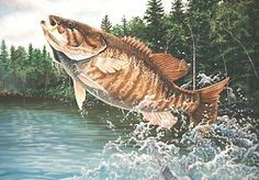 Smallmouth Bass Fishing Tips & Articles - Learning How To Fish