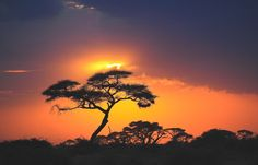 From breathtaking sunsets, sunrises, rainbows and thunderclouds, too enchanting full moons and highways of stars- Africa truly has the most magical skies. Rhino Africa, Going For Gold, Safari, Sunrise, Sky, Photos, World, Outdoor, South Africa