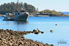 Walking around Nanaimo is popular among visitors and residents alike, and there are so many great locations to do so. Here are the top 10 Nanaimo walks. Great Places, Places To Go, West Coast Canada, Dog Area, San Juan Islands, The Far Side, Lake Superior, Vancouver Island, Nature Reserve