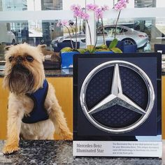 You are telling me you dont have an Illuminated Star yet? Photo via Mercedes Benz Logo, Stars, Twitter, Autos, Sterne, Star