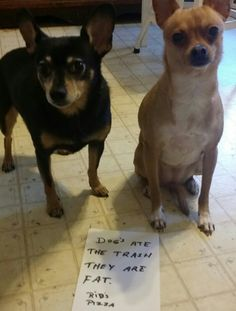 My dogs Sug. And Cricket....the guilty trash eaters!