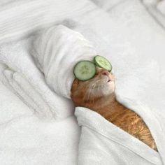 Looks like what I need.... we care spa