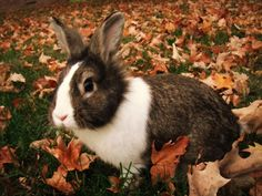 Bunny Among Autumn Leaves - October 29, 2011