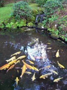 How to Make Your Own Pond Filtration System