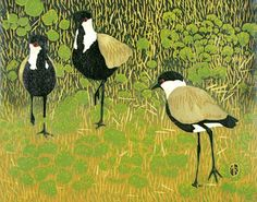 Spur Winged Plover by Andrea Rich | Woodcut Print | Spur Winged Plover