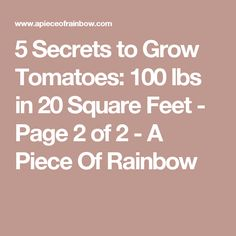 5 Secrets to Grow Tomatoes: 100 lbs in 20 Square Feet - Page 2 of 2 - A Piece Of Rainbow