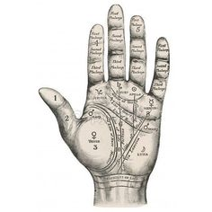 PALMISTRY/MAP (GRAPHIC) (From Mary Evans - Prints Online) ❤ liked on Polyvore featuring fillers, backgrounds, drawings, hands, art, doodles, detail, text, borders and phrase