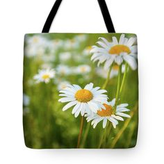 Daisies At Sunset Tote Bag for Sale by Anna Matveeva
