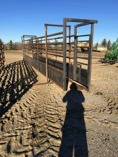 Cattle Barn, Beef Cattle, Cow Pen, Cattle Corrals, Farm Hacks, Bison, Livestock, Cows, Rodeo
