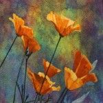 applique poppies wow  lenore crawford