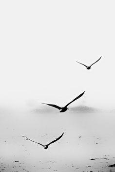 fly away, birds