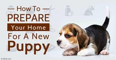 Bringing a new puppy home is exciting but often stressful, so preparing ahead of time can help set him up for success in his new life with you. http://healthypets.mercola.com/sites/healthypets/archive/2015/11/16/new-puppy-arrival-preparations.aspx