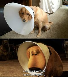 I do not like the cone of shame...:(