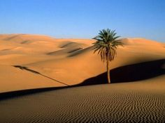 The Great Oasis of the Libyan Desert. The African continent hosts the largest hot desert on earth