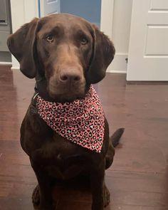 Bandana Print, Dog Bandana, Pink Leopard Print, Bunting, Labrador Retriever, Super Cute, Handmade, Instagram, Labrador Retrievers