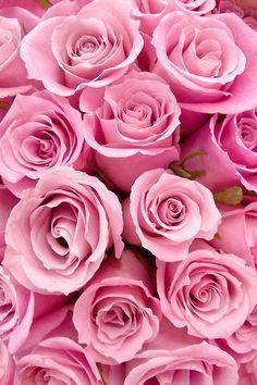 Repinned: Roses