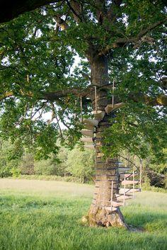 Finurliga trädtrappan du bygger utan verktyg – vilken sommardröm - Sköna hem
