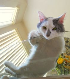 9 pictures of cats on glass tables taken from below... (they are sooooooo cute! i love the 4th, 5th & 6th pictures the best.)