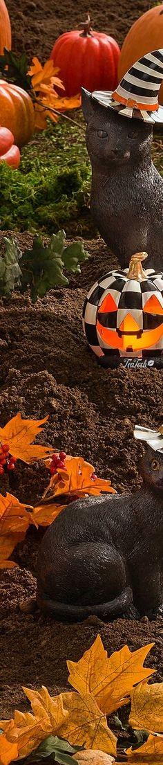 Seasons Poem, Seasons Of Life, Four Seasons, Halloween Celebration, Harvest Time, Trick Or Treat, Bloom, Treats, Creative