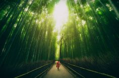 Top 10 Streets-Bamboo-Photo by peter stewart