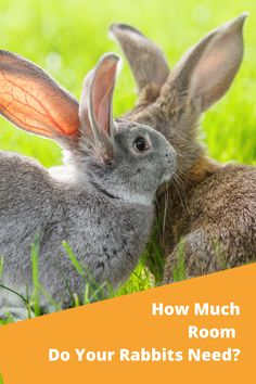 Rabbits aren't huge, but to be happy they need more space than you might think. Rabbit Run, Pet Rabbit, Netherland Dwarf, Mini Lop, Rabbit Hutches, Hiding Places, Workout Rooms, Rabbits, How To Look Pretty