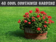 48 Cool Container Gardens