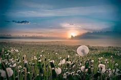 Pienių ..rytas — at Lithuania - Photo by : Deividas Narutavičius.