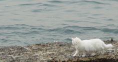 Exploring the seaside . Green Eyes, Cool Cats, Polar Bear, Seaside, Exploring, Beach, Animals, Animales, The Beach