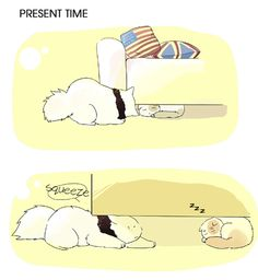 America and England cats 1