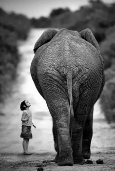 Funny pictures about Young girl and elephant. Oh, and cool pics about Young girl and elephant. Also, Young girl and elephant. Beautiful Creatures, Animals Beautiful, Animals And Pets, Cute Animals, Wild Animals, Baby Animals, Funny Animals, Chobe National Park, Photo Animaliere