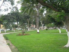 Gran diversidad de flora, podrás encontrar en el Parque el Carmen, ubicado en Pueblo Libre.