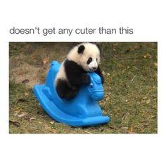 #cute #animals #adorable