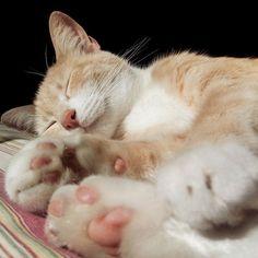 #kucingbikingemes ini kiriman dari : @iamgretta_    punya #kucingbikingemes juga? follow dan tag @kucingbikingemes  jangan lupa pakai #kucingbikingemes   via #catsofinstagram #cat #cats #catofinstagram #cat_of_instagram #catstagram #catsoftheworld #catslover #catgram #catagram #catslife #kucing #kucingku #kucinglucu #kucingsaya #kucingimut