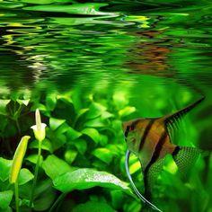 Prachtige foto van maanvis