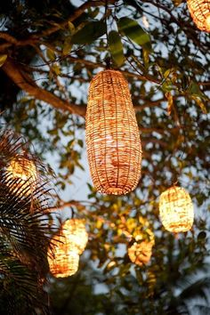 Backyard lighting hanging from the tree