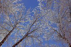 Himmel, Schnee, Äste, Winter, Schneezauber, Weiß, Wald