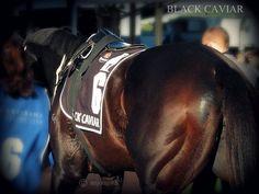 Amazing Black Caviar , Australian Race horse.  Lovely mare