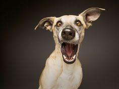 Não sei vocês mas eu adoro fotografias de animais, ainda mais quando estão bem divertidas e criativas como essas de Elke Vogelsang. O fotógrafo é fera quando se trata de deixar cachorros e gatos ainda mais fofos em fotos. Ele brinca e se diverte enquanto seus cachorros, Noodles, Scout e Loli viram seus modelos. Mas …